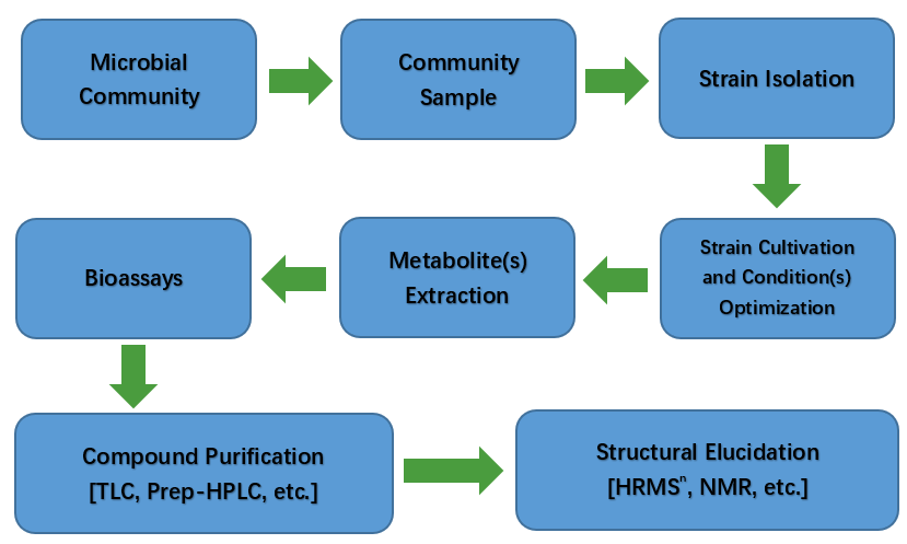 A typical workflow for conventional bioprospecting and drug discovery.